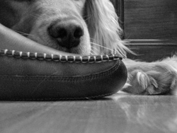 Slipper and Dog, Feb 07, photo by Stu Gravel